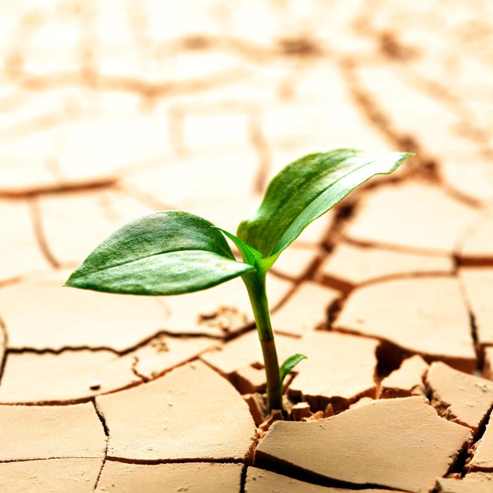 En tiempos de resiliencia